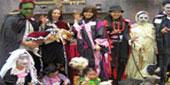 日本上演人狗时装比拼