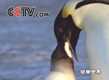动物世界——南极动物